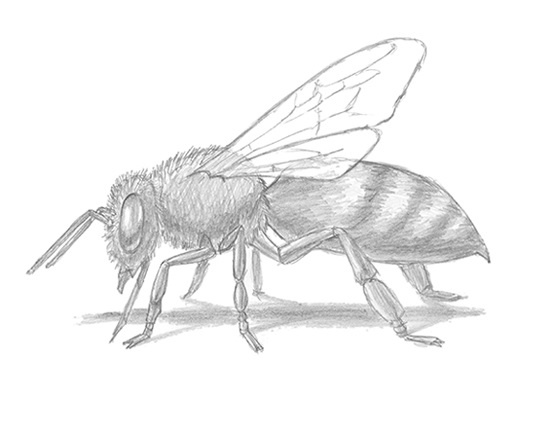 draw-bee